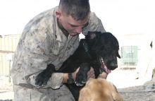 Robin Ganzert: When Military Dogs return to the US