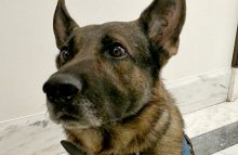 American Humane's Robin Ganzert discusses military dogs