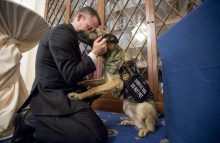Jason and Axel, a military working dog, at American Humane's awards