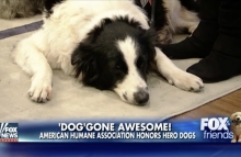 Robin Ganzert, CEO of American Humane and a hero dog on Fox News' Fox and Friends
