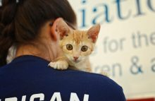 American Humane supports services for cats