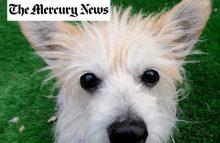 Robin Ganzert articles featured in The Mercury News