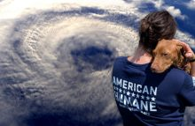 Robin Ganzert is the CEO of American Humane, which has deployed to help animals caught in the path of Hurricane Florence