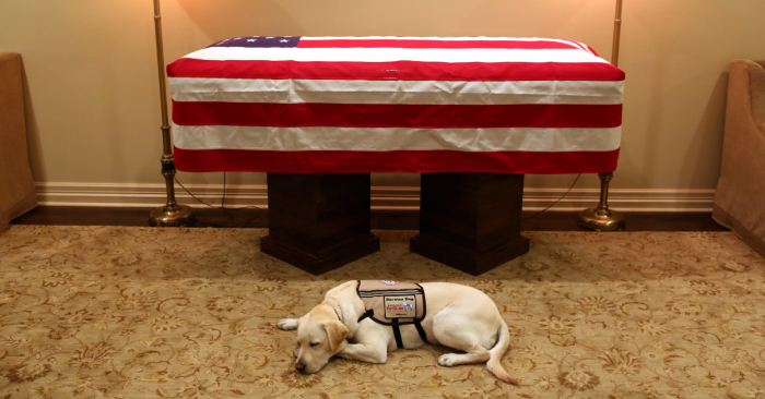 Robin Ganzert writes about how more service dogs are needed