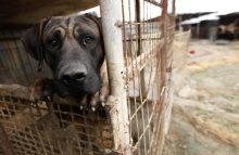 Robin Ganzert writes about winter neglect of pets