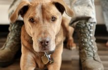 Robin Ganzert: We need to better serve military dogs
