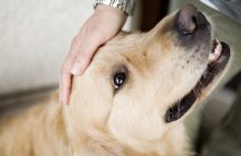 Robin Ganzert, CEO of American Humane, writes about how pets are an antidote to America's stress