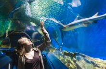 Zoos - Young girl in aquarium tunnel with sharks