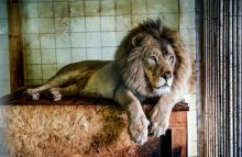 Robin Ganzert writes about how zoos and aquariums save 1 million species from extinction